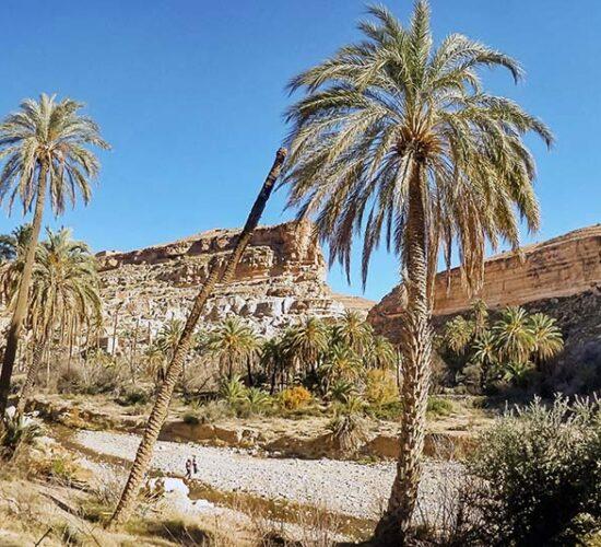 Ghoufi Canyon Overlooking an Oasis