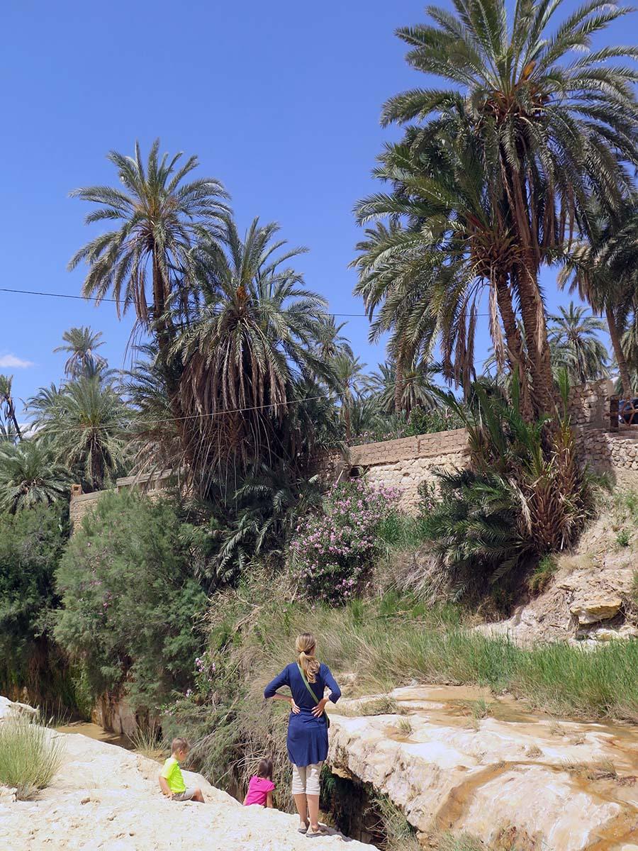 Tamerza Palm Oasis